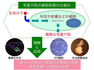 Imamura1